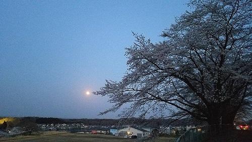 ブルームーンと桜と!①