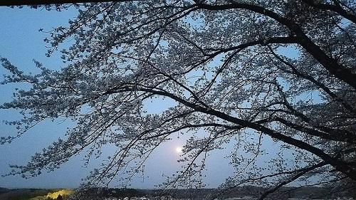 ブルームーンと桜と!②