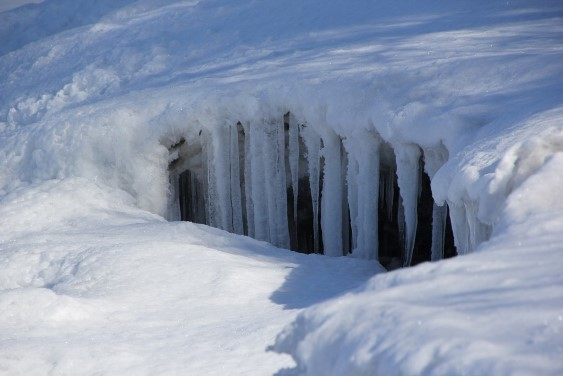 雪中のつらら