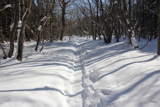 しぶき氷までの林道