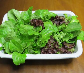 ミックスレタスと韓国レタス収穫物
