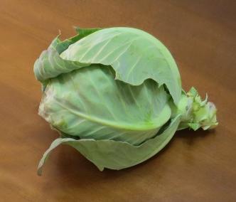 キャベツの芽の収穫物