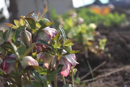 庭へ_4489 (2)