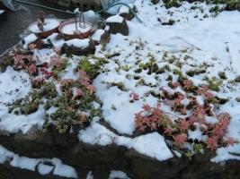雪景色~朝には晴れて雪は溶け始め通路・地植えコーナーに残るだけです。2018年1月23日朝
