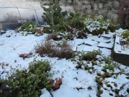 地植えコーナー雪景色~2018.01.23.07:23am