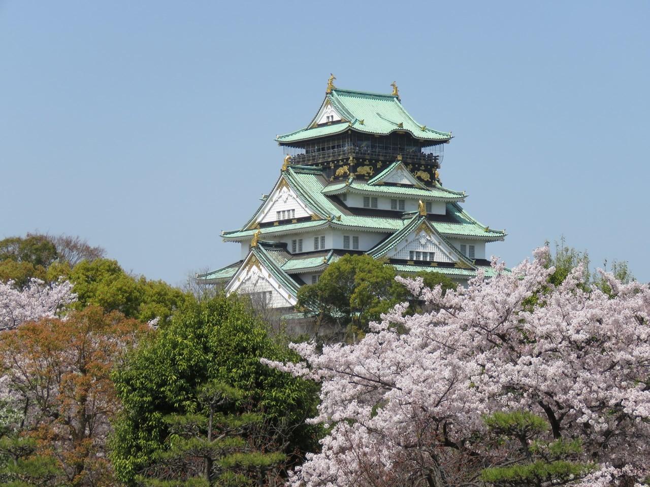s-大阪城サクラ