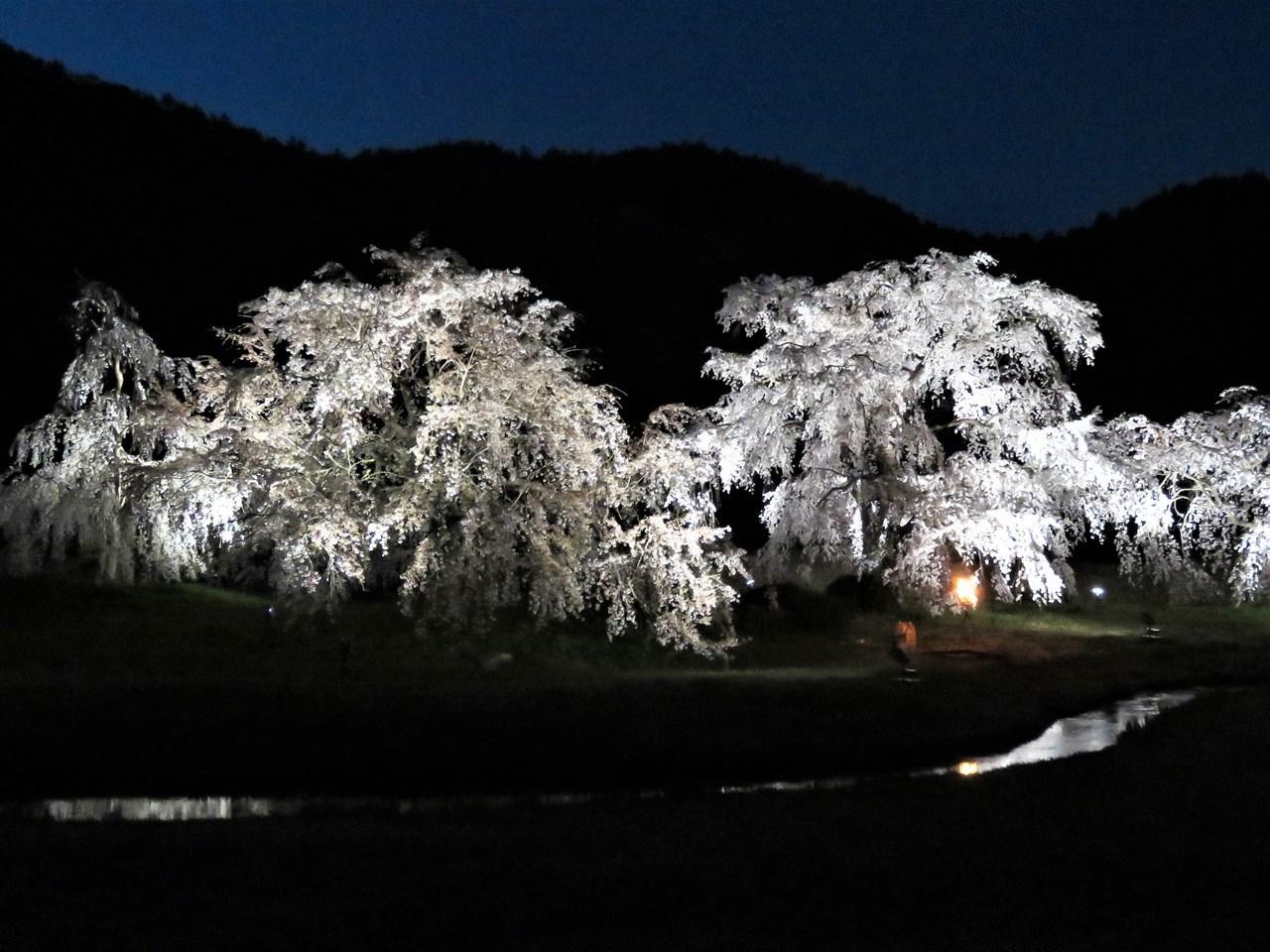 s-平安郷夜桜