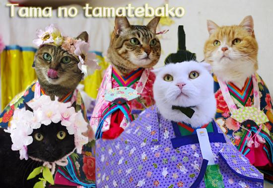 tamasda0-dasdaコピー
