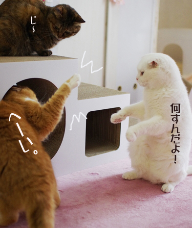 おぺいろいをりをろwrうぇれ2)のコピー