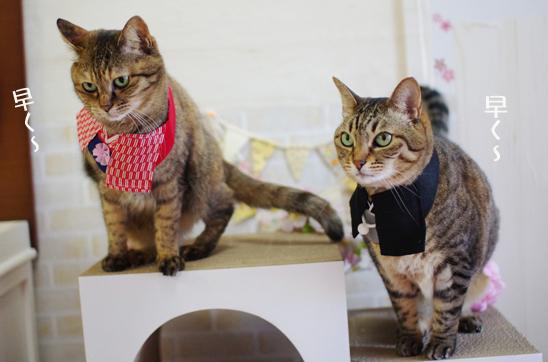 スルー猫とステップ爪とぎ活用組
