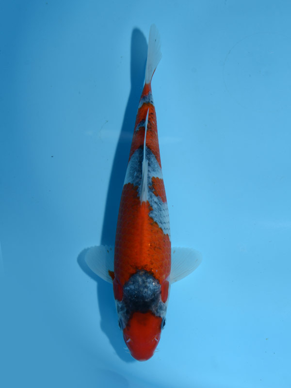 No1 23cm