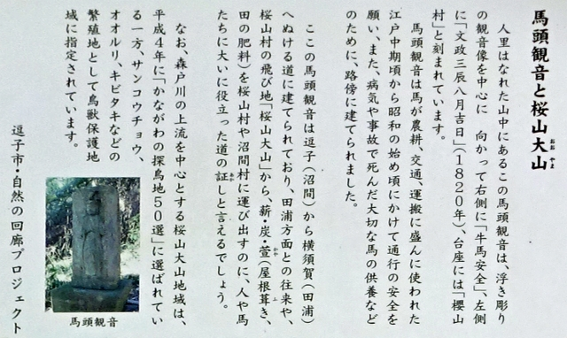 11馬頭観音と桜山大山説明