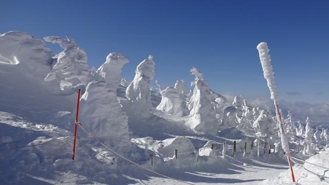 4山頂駅周辺の樹氷