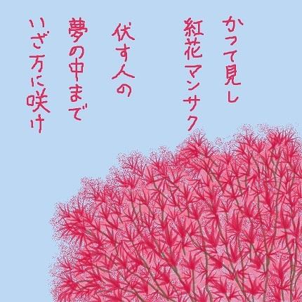 紅花マンサク1 - コピー