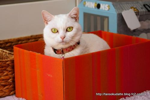 箱は魅力♪