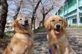 桜の下でいい笑顔!