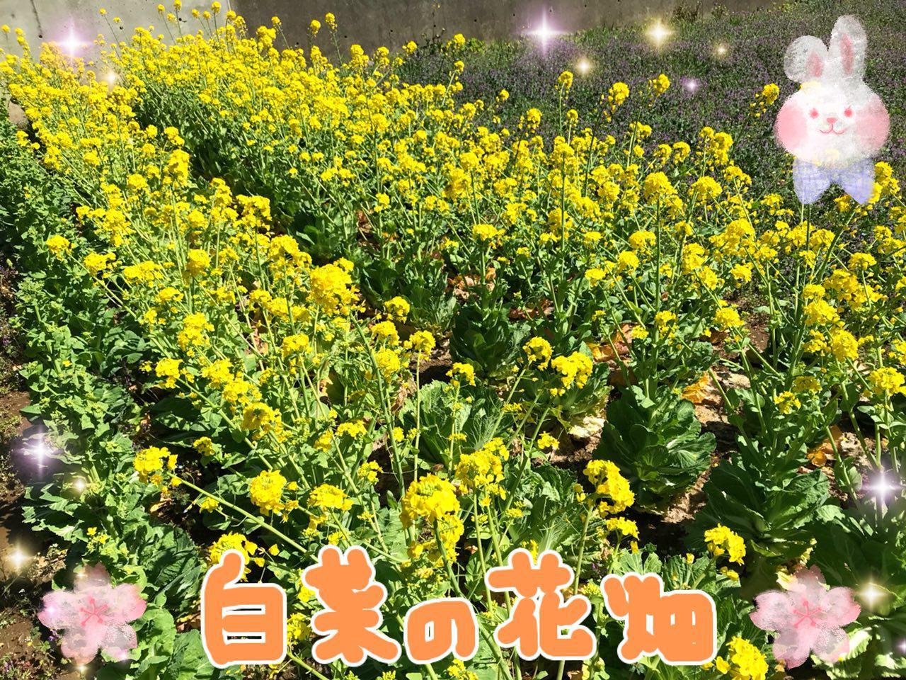 photo_2018-03-23_22-43-30.jpg
