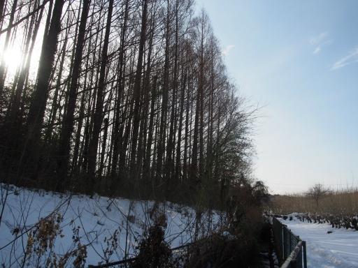 20180128・全徳寺と狭山湖1-15