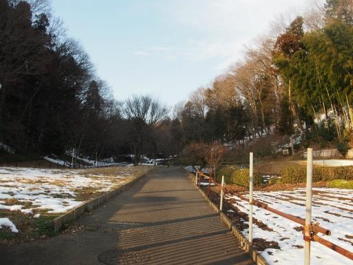20180128・全徳寺と狭山湖2-17・チカタの森