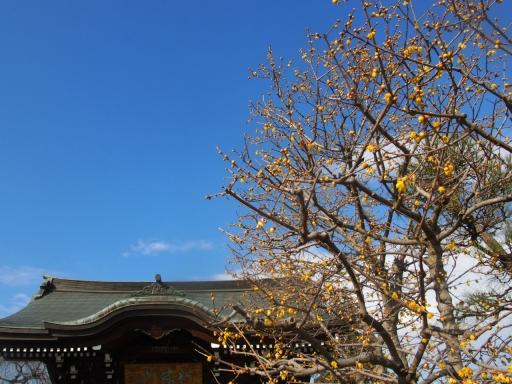 20180128・全徳寺と狭山湖空03・樹木と空