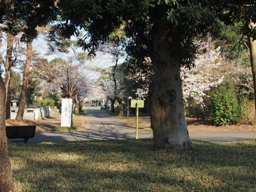20180325・墓参り1-16