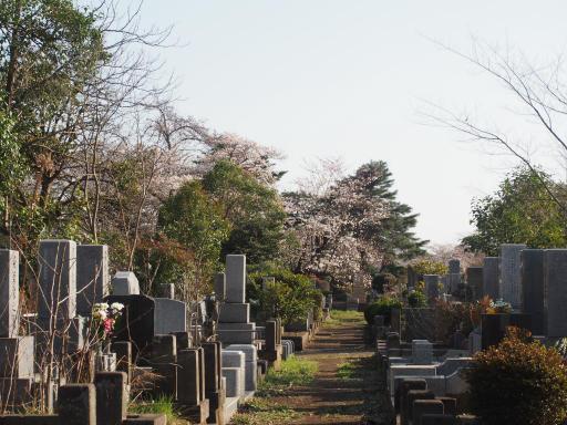 20180325・墓参り1-13