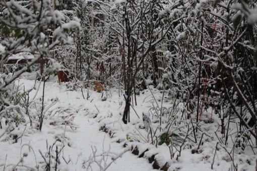 雪0001