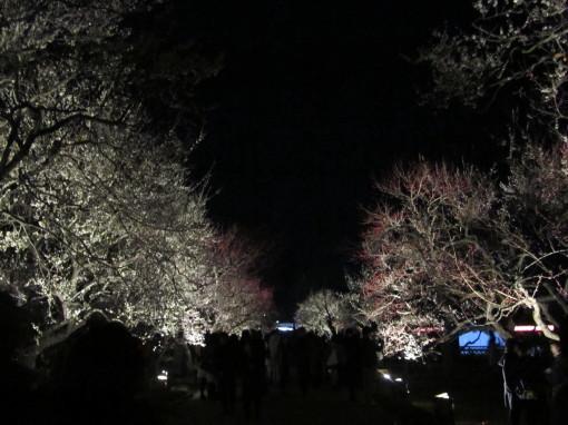 夜梅祭0001