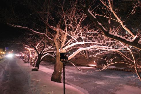 弘前城冬のライトアップ2018-3
