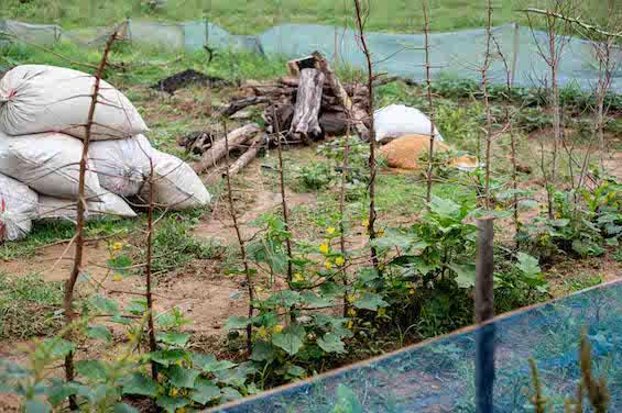 写真1:きれいに整備された家庭菜園の様子(延岡撮影)
