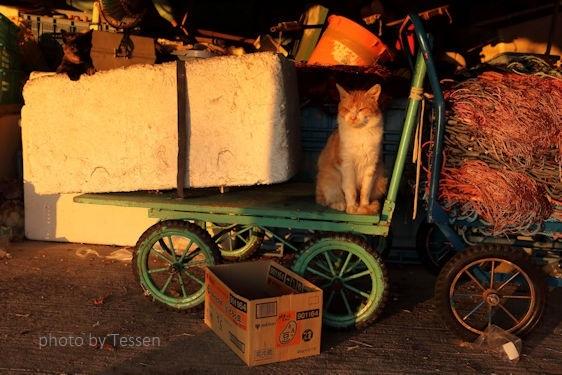 IMG_9726猫