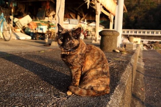 IMG_9598猫