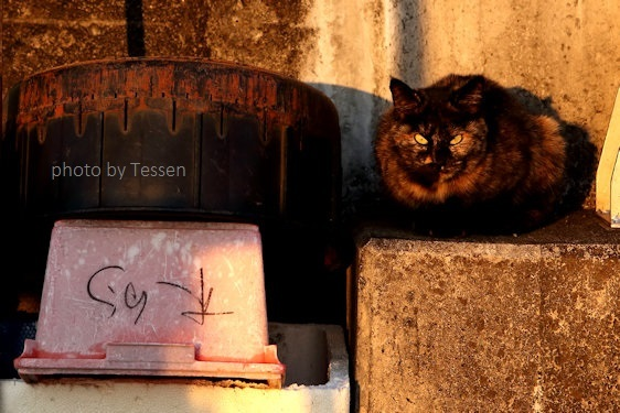 IMG_9663猫