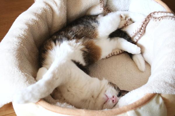 躍動寝姿図