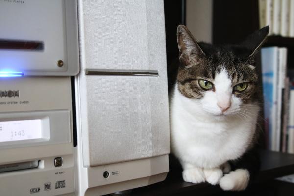 猫はデビルイヤーを傾ける