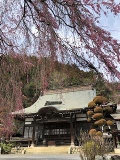 2018桜梅岩寺