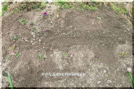 470 イチゴ周辺の草を抜いて肥料を入れた
