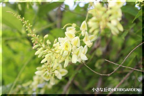 470 坂道の草花