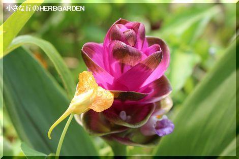 470 クリクマ 開花