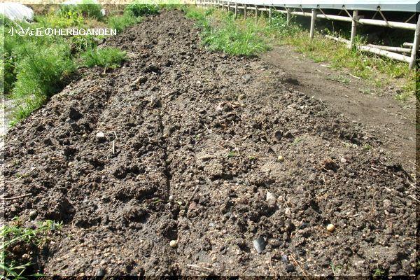 600 枝豆の種まき