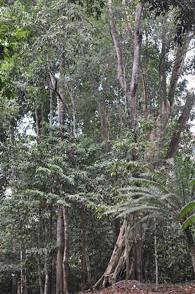 低地1次林