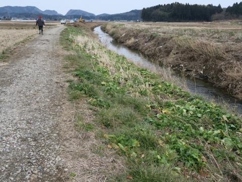 「片野地区川俣川掘削堤防問題」 (8)