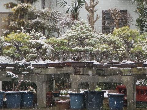 「平成30年2月22日石岡市は雪だった!」②