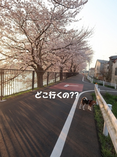 IMG_6765-2.jpg