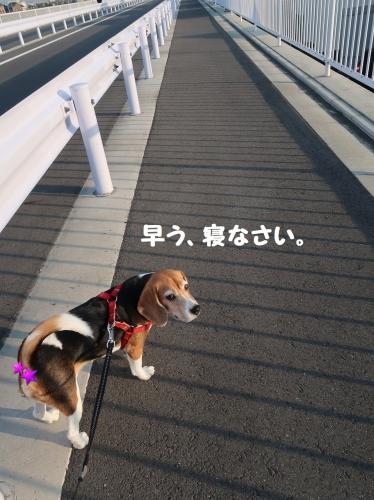 IMG_6819-2.jpg