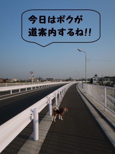 IMG_7038-2.jpg