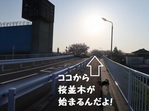 IMG_7041-2.jpg