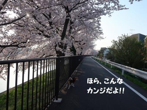 IMG_7045-2.jpg