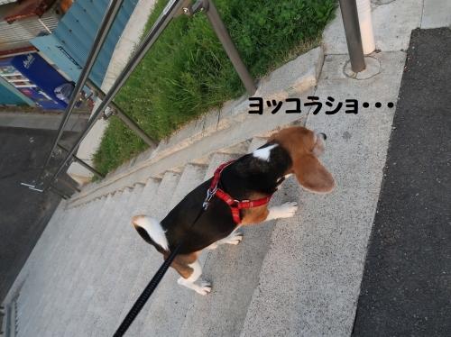 IMG_7592-2.jpg