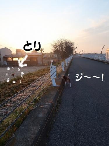 IMG_a5227-2.jpg